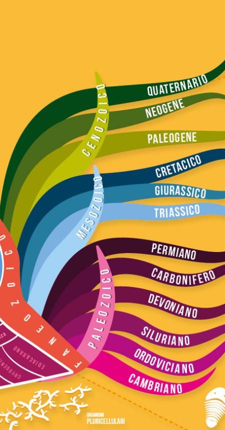 Ammonite del tempo